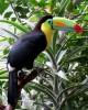 Тур в Коста Рике
