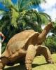 Тур в Маврикии