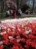 В парк тюльпанов с нами!, Аалсмеер, Парк Тюльпанов Кеукенхоф