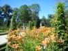 Лилейник - излюбленный цветок, Варшава, Дворец Вилянув