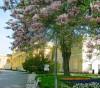 Камелии цветут в Вилянове, Варшава, Дворец Вилянув