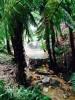 Папоротниковые деревья - ровесники динозавров, Сан-Мигел, Caldeira